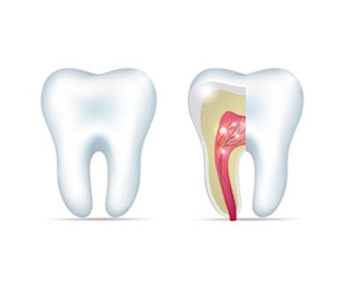 Root Canal Diagram | Bondi Junction NSW